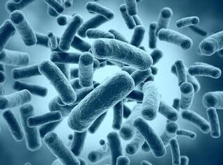 プラーク、細菌のイメージ図